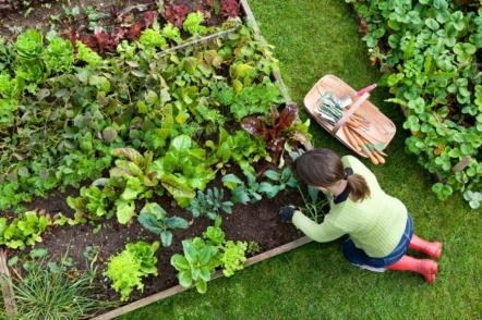 «Розумний» город, або Як садівнику-городнику полегшити своє життя