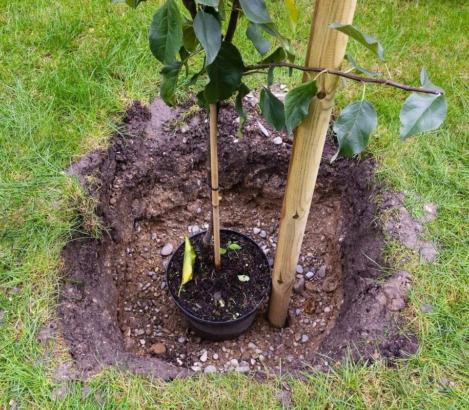 Осінній сад – ідеальне місце для посадки нових дерев і кущів