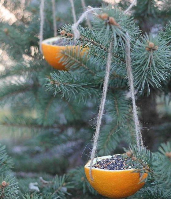 Помаранчовий колір дуже гарно виглядатиме на фоні хвойних рослин.