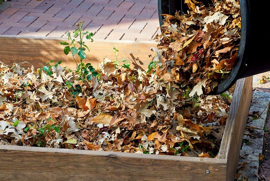 Мульчування опалим листям