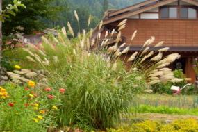 Декоративні трави і злаки - топ-10