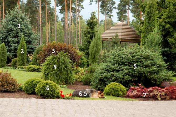 ландшафтний дизайн фото