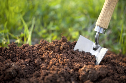 Визначаємо кислотність ґрунту в домашніх умовах