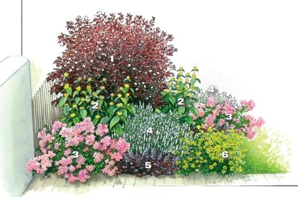 квітник зображення 10