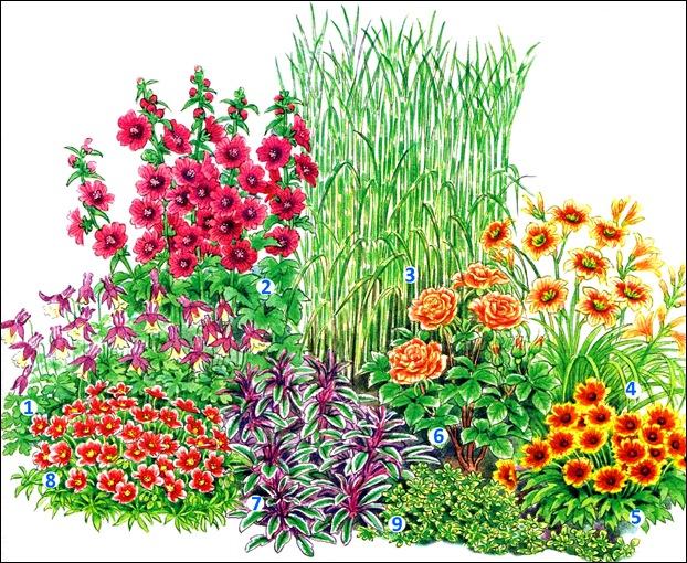 квітник зображення 14