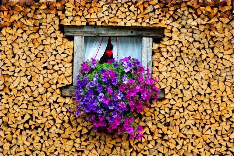 дрова картинка 17