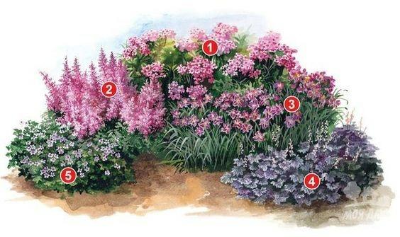 квітник зображення 21