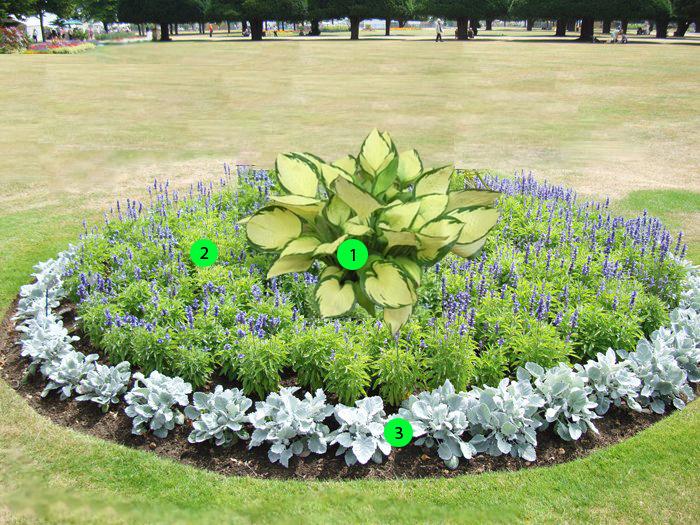 квітник зображення 4