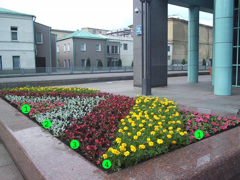 квітник зображення 5