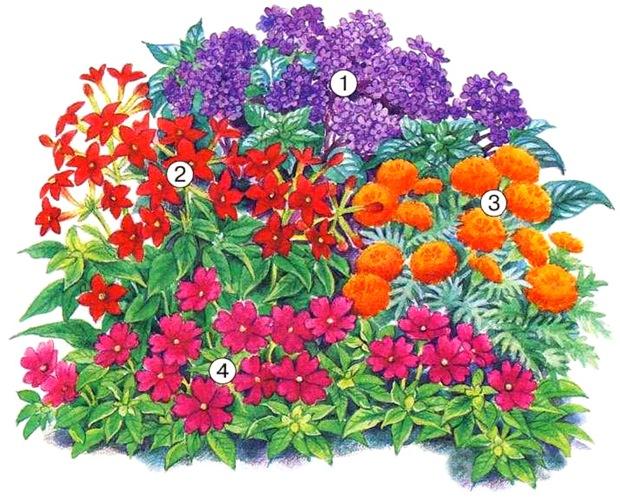 квітник зображення 8