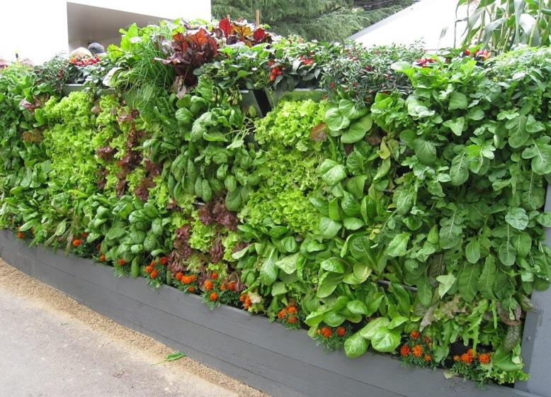 Без регулярного поливу рослини на вертикальних грядках не виживуть