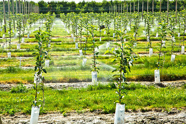 Гарно родити буде тільки той плодовий сад, дерева якого максимально районізовані