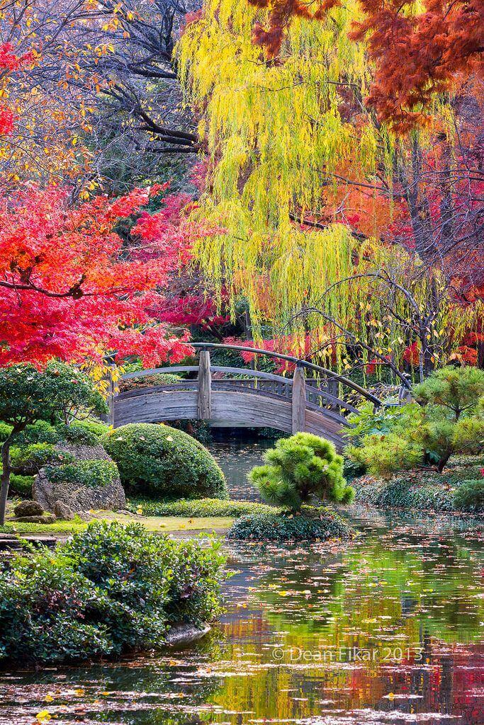 ідеї для саду картинка 53