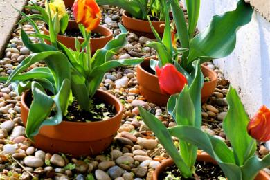 квітник своїми руками картинка 12