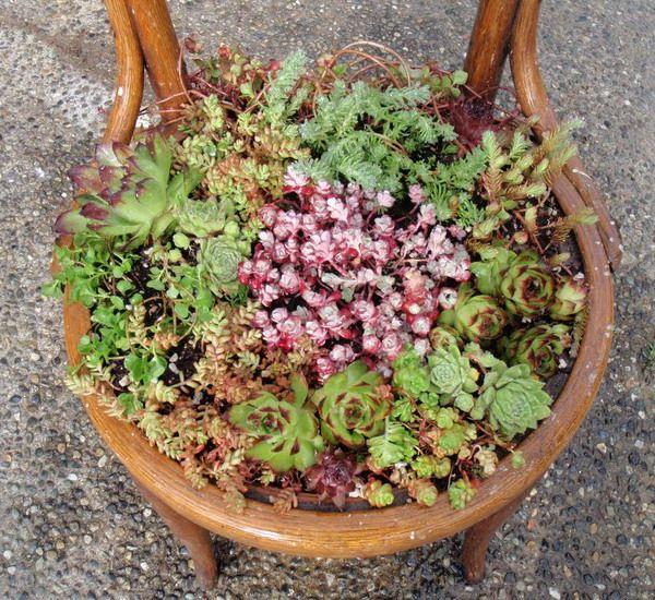 Ідеї для саду зображення 4