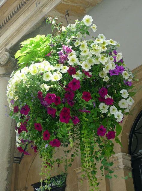 рослини в контейнерах фото 6