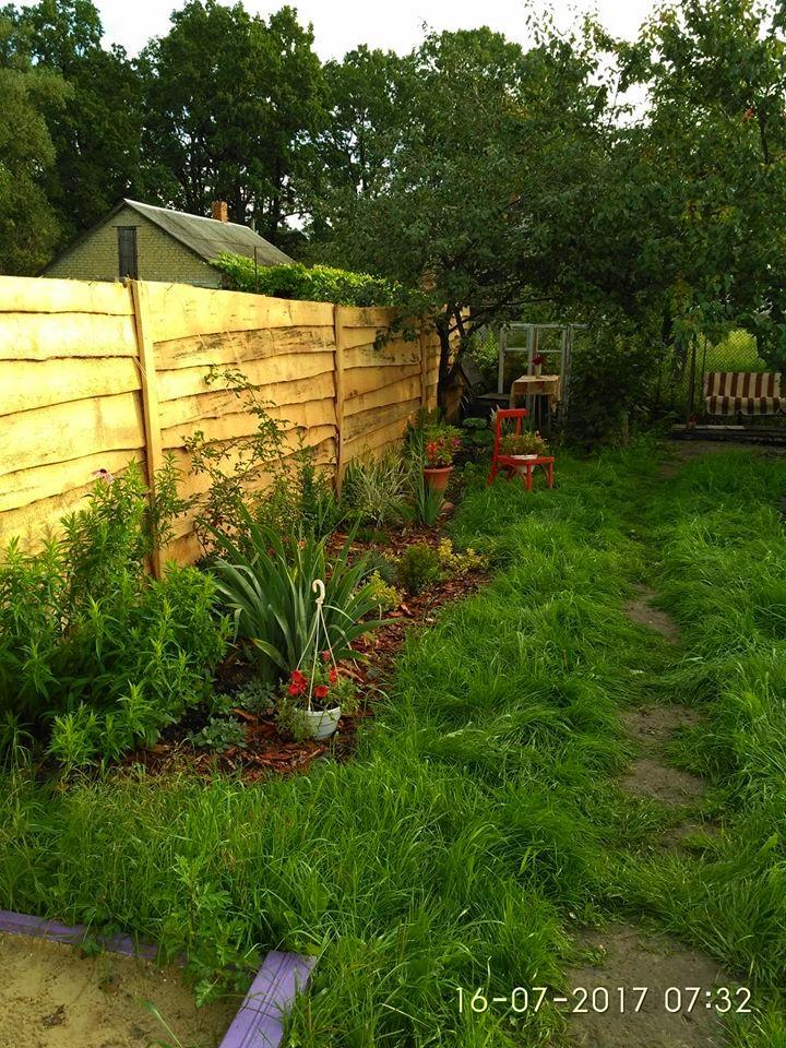 Міксбордер, середина літа першого садового сезону