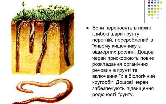 Ніхто і ніщо так не допоможе ґрунту стати кращим, як дощові черви