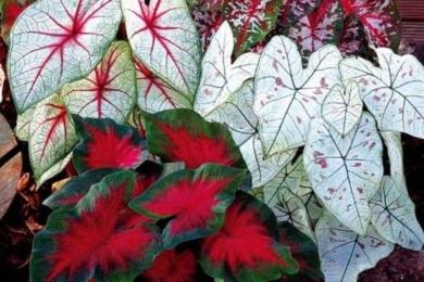 кімнатні рослини картинка