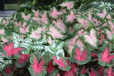 екзотичні рослини картинка