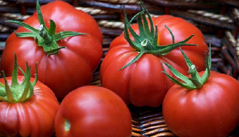 Вчасно збирайте врожай томатів