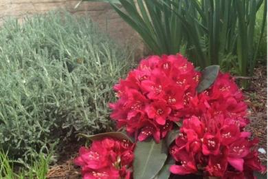 квіти в саду