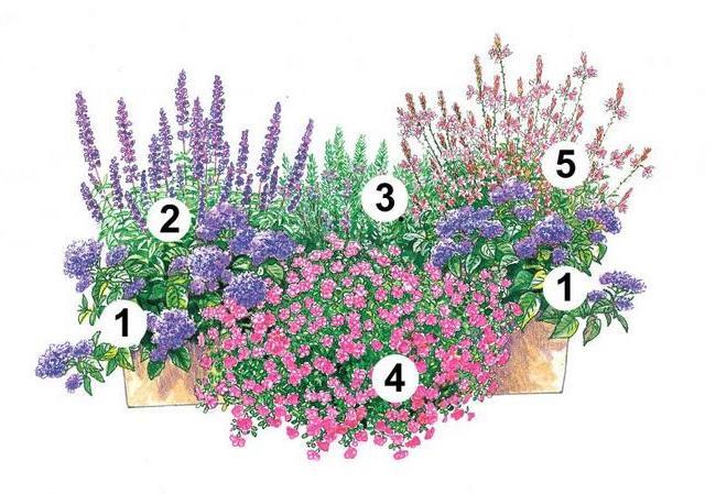 балконні квіти фото 2