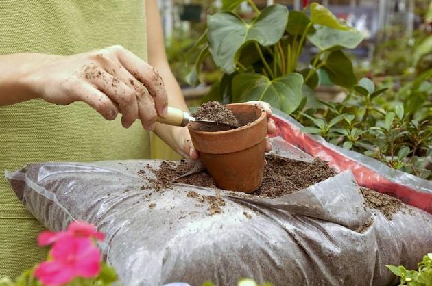 Насправді всі субстрати для кімнатних рослин можна поділити за кислотністю, щільністю і поживністю