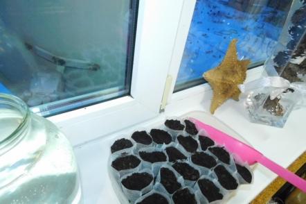 Одноразові мішечки для розсади — як використовувати?