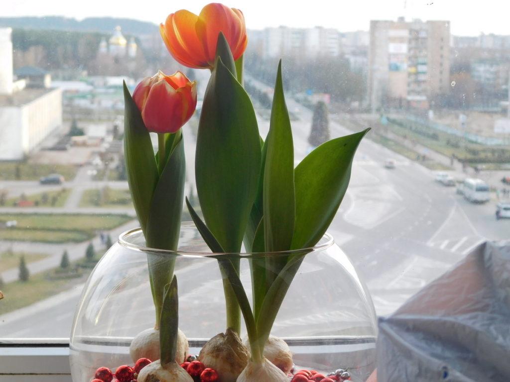 tyulpany-9-1024x768-1009626