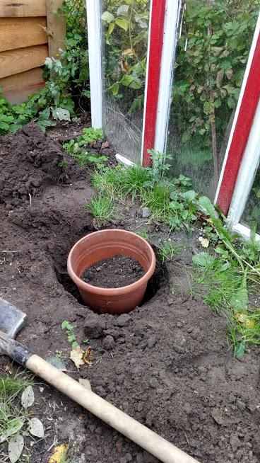 Відра з тюльпанами закопала в землю