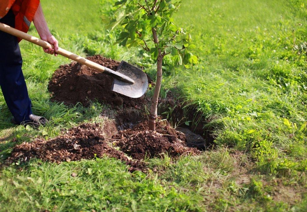tree-planting-1024x705-4087378