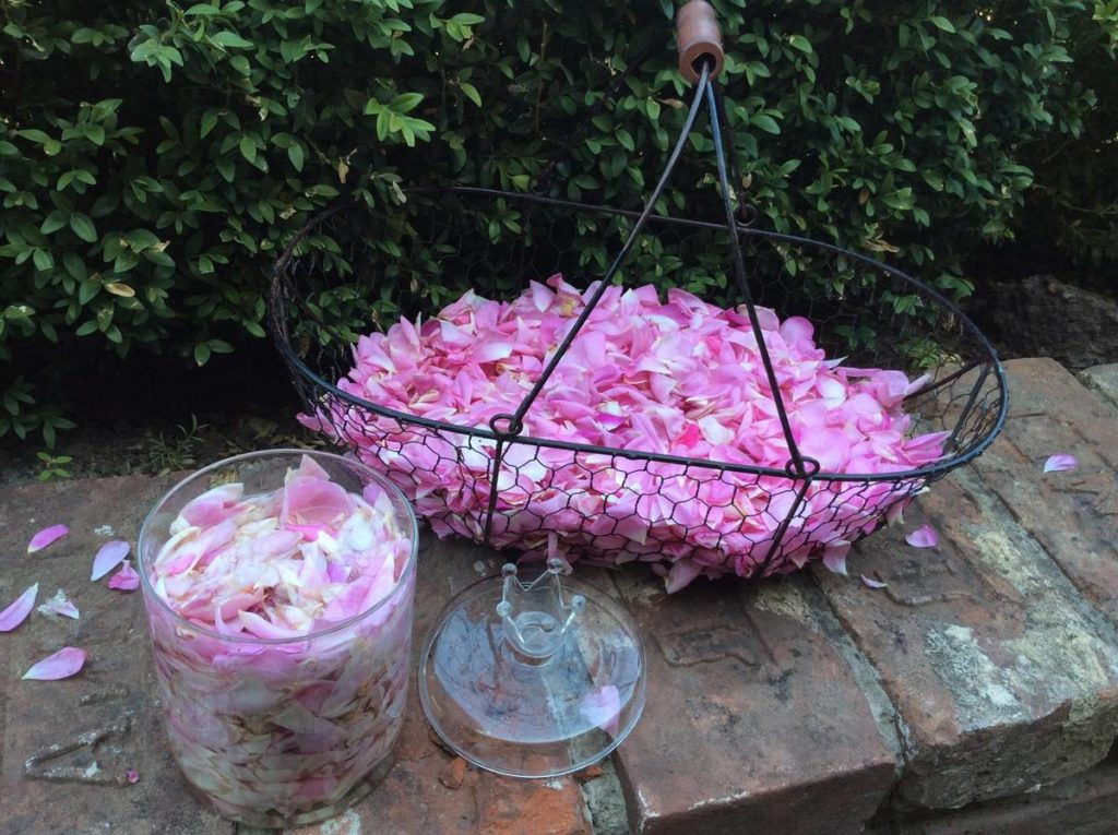 Що зробити з пелюстків троянд?