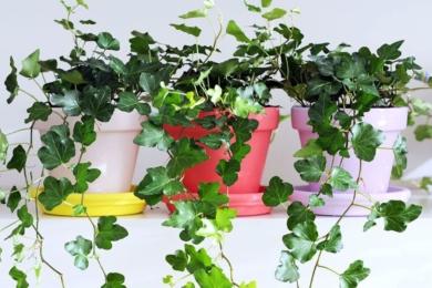 Однотонне фарбування горщиків для кімнатних рослин