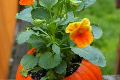 Гарбуз-кашпо з квітами