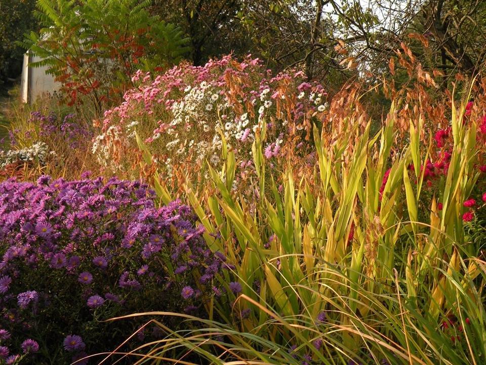 Починають обрізку багаторічних квітів з кінця жовтня до середини листопада