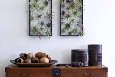 Повітряні рослини (аерофіти)