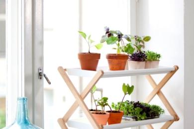 Багаторівневий сад на підвіконні