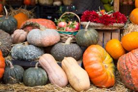 Вражаючі сорти гарбузів — і красиві, і смачні