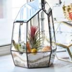 Флораріум The glass garden