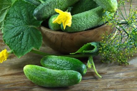 Свої огірки вже в травні, або 7 секретів ранніх огірків