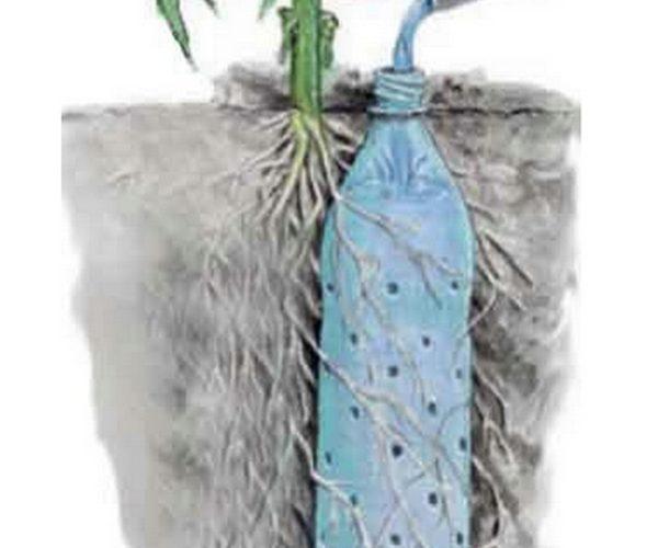 Для більшості рослин полив безпосередньо біля коріння набагато корисніший, ніж зверху
