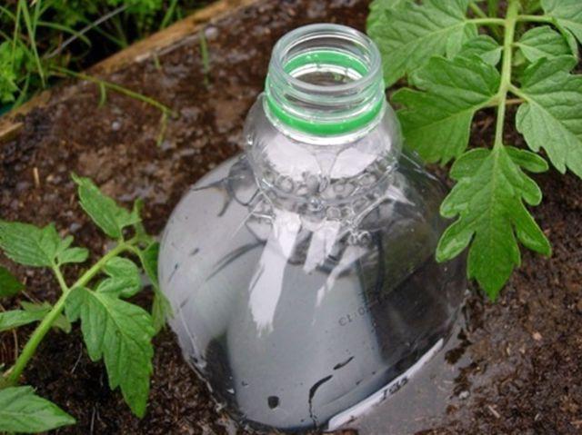 Крапельний полив з пластикової пляшки — просто та ефективно