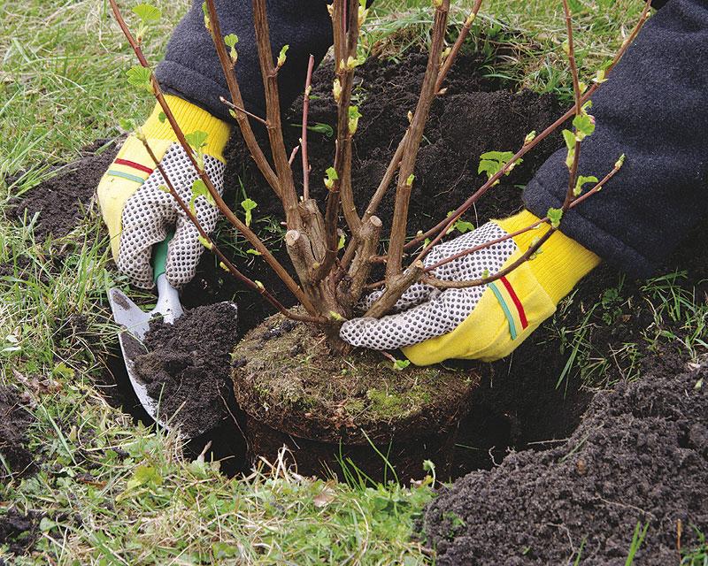 Квітень - час садити дерева і кущі