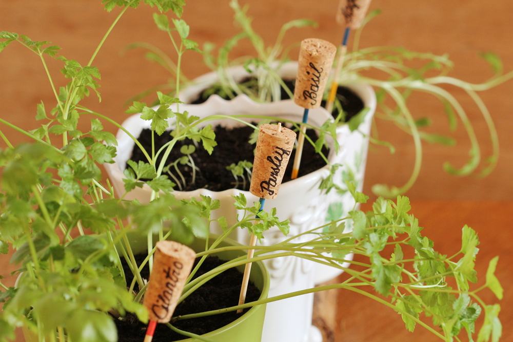 Маркери для рослин з винних корків (вертикальні)
