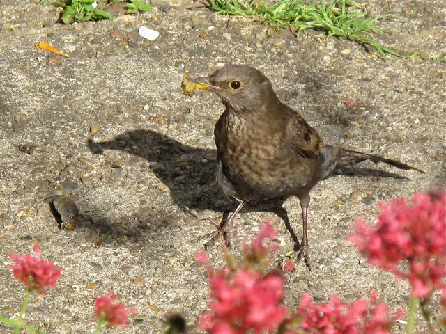Птахи захищають сад від слимаків