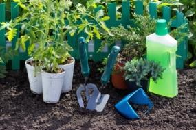 9 правил успішної пересадки розсади у відкритий ґрунт