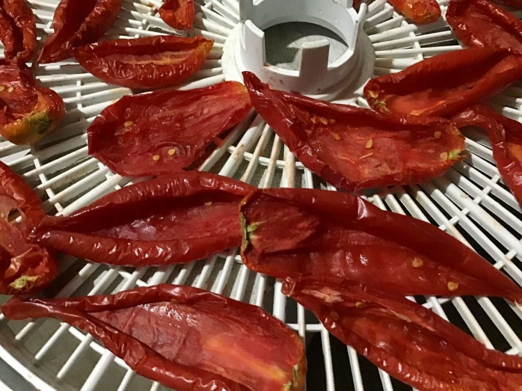 vyaleni-pomidori-04-1024x768-3626817
