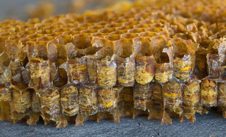 Ось так перга виглядає на розрізі стільникової рамки