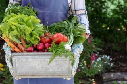 Як підвищити родючість ґрунту без гною та мінеральних добрив?